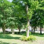 Isom Park